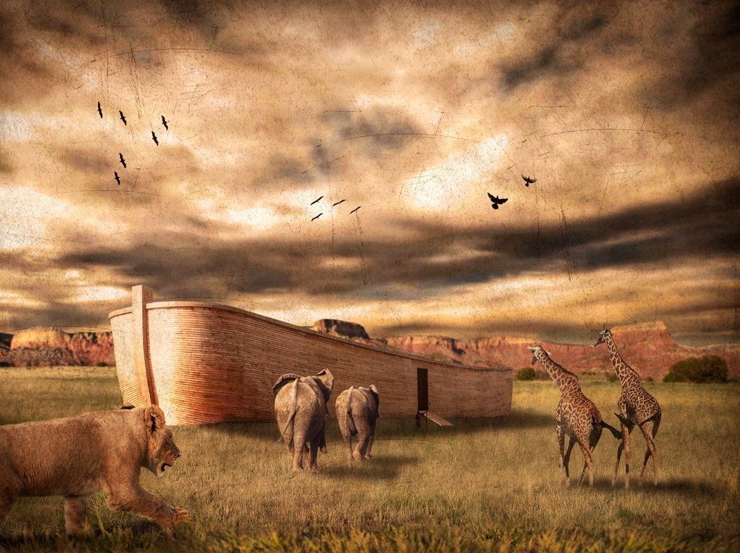 an analysis of noahs ark Noah's ark chiropractic offers many health care services, including animal chiropractic for horses, dogs, and cats, as well as human chiropractic.